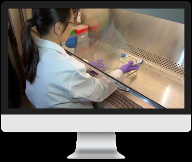 Plating Cryoplateable Hepatocytes